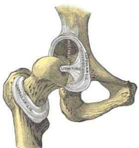 Exemplo de articulação.